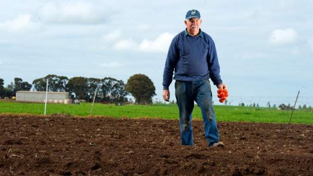 Tomato grower Bruce Weeks on his property in Rochester, Victoria.