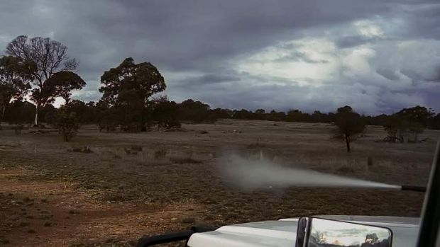 Hunter ... A professional shooter fires from his vehicle at Mulligan's Flat Nature Reserve as part of the ACT ...