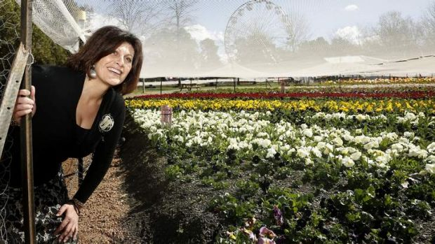 Floriade marketing and communications manager Adelina La Vita takes a sneak peak at the Questacon garden bed.