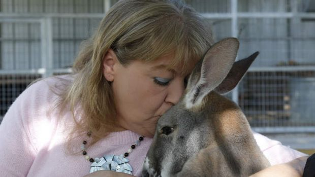 Creature comforts: Christie Carr kisses Irwin the kangaroo.