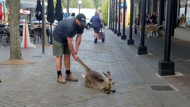 One All-Australian meets another: AFL star Tony Lockett with a kangaroo in Bowral.