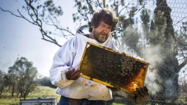 Bee Expert, Dr Denis Anderson, with some of his bees at Gungahlin.