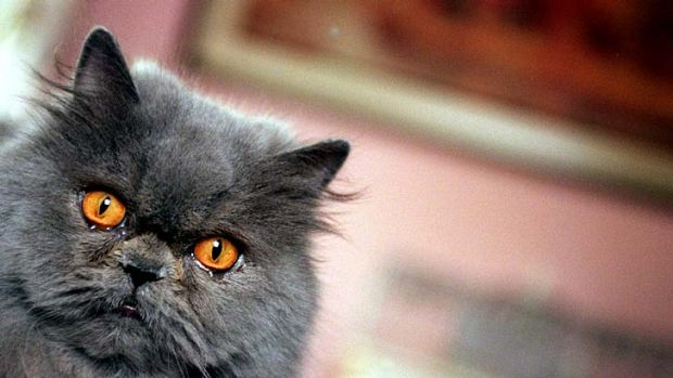 Iran's plan to send a Persian cat into space prompted an outcry from animal rights groups.