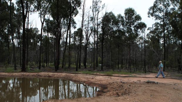 Tony Pickard, who first made public the toxic spill, at a Pilliga Forest site.