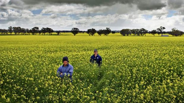 Australia need to rethink its industry support if it wants to become Asia's foodbowl, a new report says.