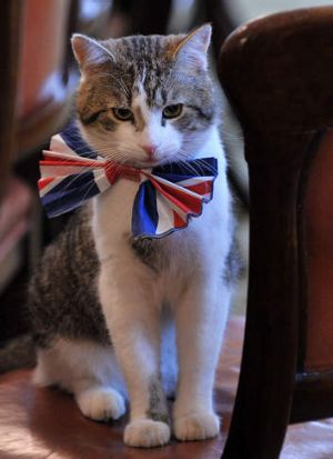 Larry, the 10 Downing Street cat, sits on a chair wearing a British Union Jack bow tie ahead of the Downing Street ...