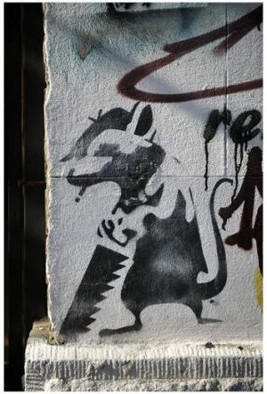 On the streets of Melbourne no more: Rat at work.