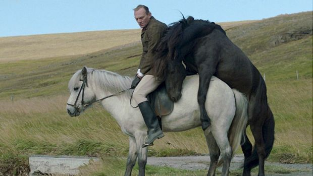 The Icelandic film <i>Of Horses and Men</i>, a standout and a prizewinner at San Sebastian.