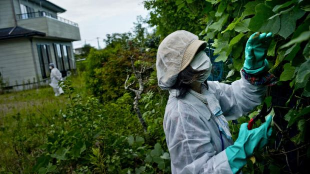 Few good choices: a woman wearing protective clothing cuts overgrown plants at her home in Namie.