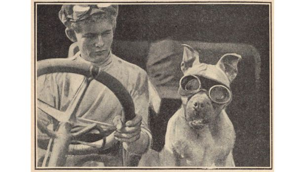 Clive Birtles driving with his dog Wowser.
