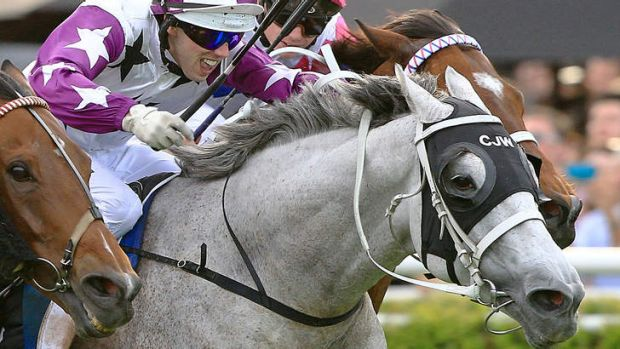 Colour and movement: Encouraging Asian betting into Australian markets would be a boon for racing.