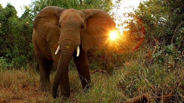 Kenya is proposing stiffer penalties for the slaughter of elephants and rhinos.