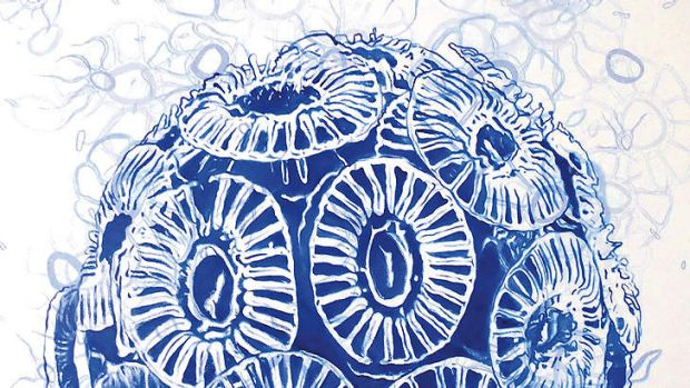 A single cell of algae Emiliania huxleyi, which helps sequester carbon. <i>Painting by Lisa Roberts.</i>