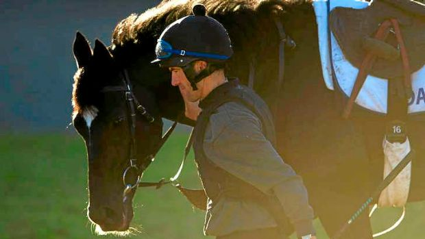 Tracking well: Globe-trotting Caulfield Cup Dandino after a trackwork session at Werribee last week.