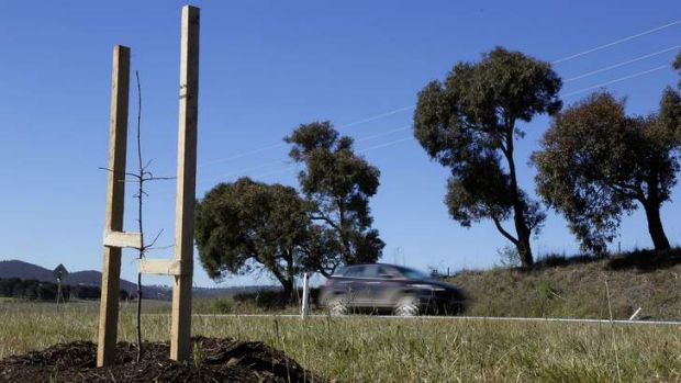 Trees planted along Canberra Avenue, as part of a gift from Canberra to Queanbeyan to celebrate the 175th birthday of ...