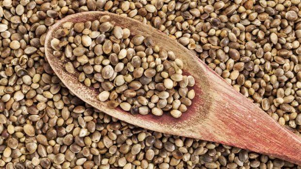 Hemp seeds.... widely available online.