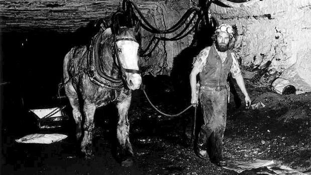 One horsepower: Australia's last pit pony at work in Collinsville, Queensland, 1986. Photo: