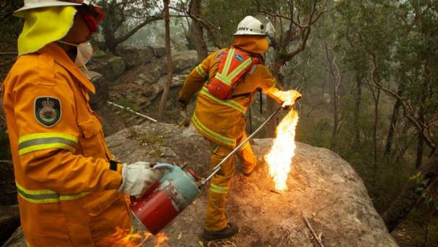 Banksia bombing: NSW Rural Fire Service Crews  in property protection mode throw burning Banksia cones off an escarpment ...