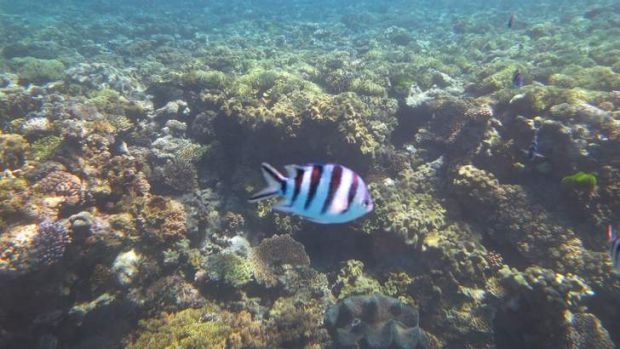 The Great Barrier Reef is under threat from planned expansions of coal ports along the north Queensland coast.