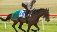 Why some horses must be euthanised (Video Thumbnail)