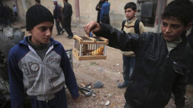 Reprieve: A boy shows off pet birds that he said had survived an air strike by government forces near a children's ...