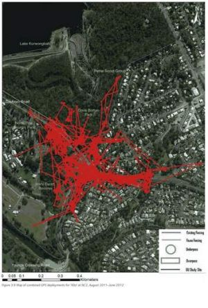 This map shows koalas are active and breeding in the exact area where the bypass is proposed.