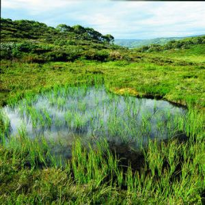 For peat's sake … An intact moss bed that has been protected from cattle.