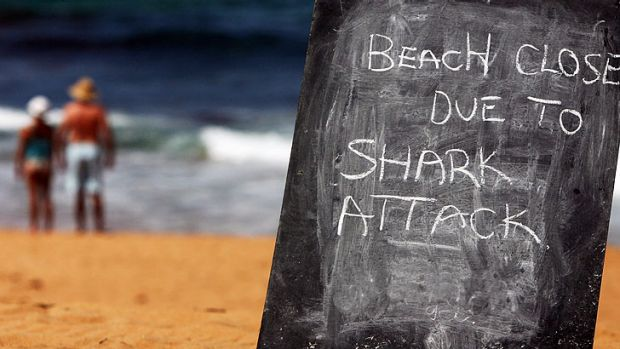 Sharks that swim into baited areas near popular beaches will be hunted by professional fishermen in aggressive new policy.