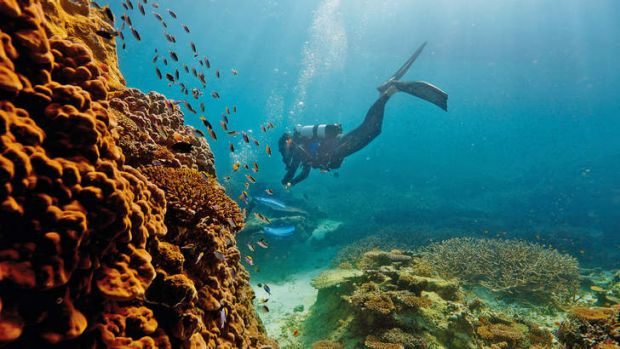 Heritage alarm: dredged soil is to be dumped in reef waters.