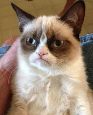Grumpy Cat achieved internet fame.
