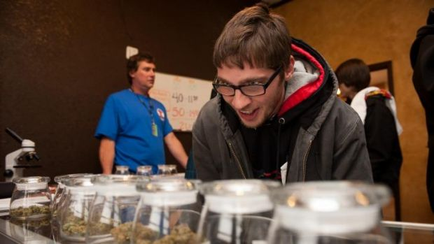 Goggled-eyed: Tyler Williams of Blanchester, Ohio, decides which strain of marijuana to buy at the 3-D Denver Discrete ...