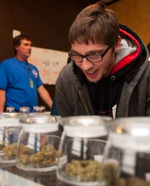 Munchies: Tyler Williams eyes the selection of products at 3D Cannabis Centre in Denver.