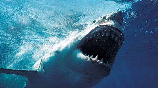 Masters of the sea: The ocean is the domain of sharks, and we are entering their world.