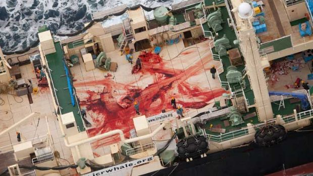 The deck of the Nisshin Maru after the whales were slaughtered.