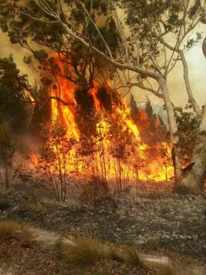 Some of North Stradbroke Island's animal species would not survive another bushfire if one happened in the next five ...