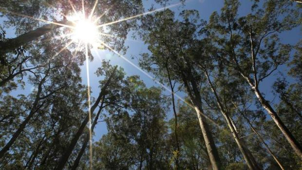 Hot times to mean bad news: A predicted rise in temperatures would see woodland become grassland.