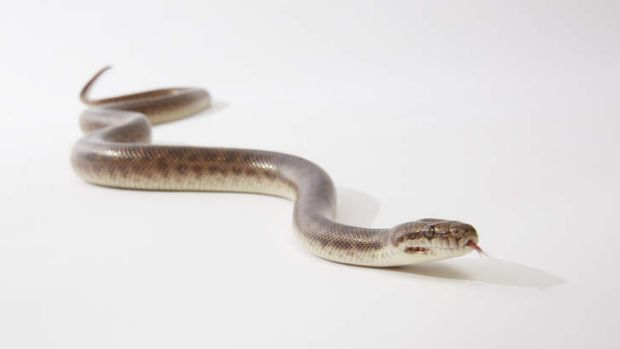 Queensland hospitals reported a 22 per cent rise in emergency department presentations due to snake bites.