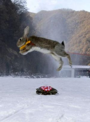 Off piste: The ski bunny proved no match for the tortoise.