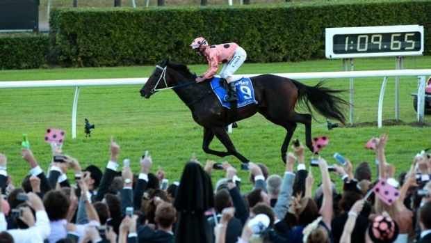 The people's champion: Black Caviar.