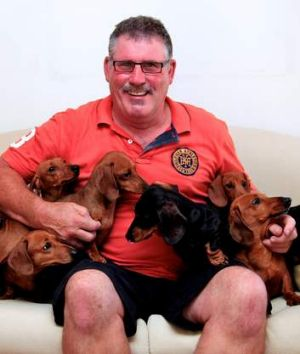 Barking mad: Paul Bevins with his nine daschunds.