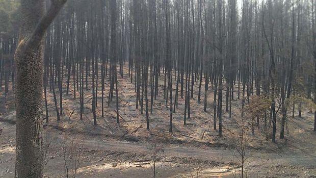 Devastation after a  bushfire burnt out of control near Wagga Wagga.