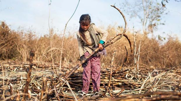 School-aged children have been photographed working in the sugar plantation in potential breach of the international ...