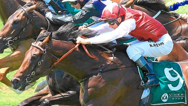 Good things come in small packages: Agadir wins at Warwick Farm on January 11.