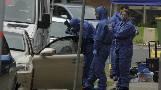 Vehicles seized: Forensic officers examine a car at the scene of the shooting. Two vehicles were later towed away.