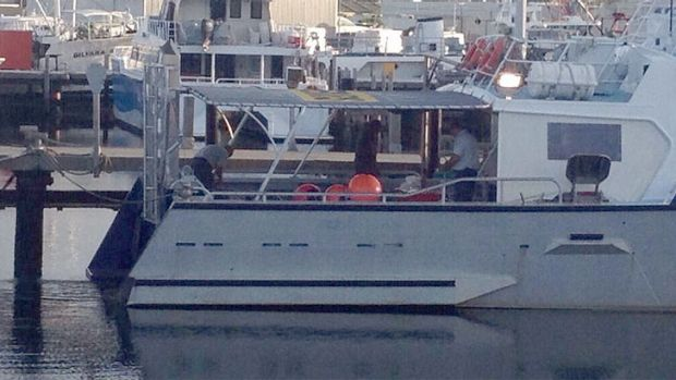 Fisheries officers setting up drum lines in Fremantle on Friday morning.