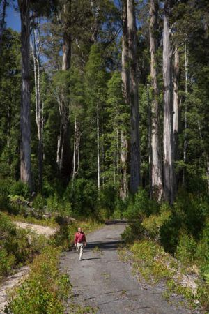 The government is winding back World Heritage Protection in Tasmania's forests agreed to under the Labor government.