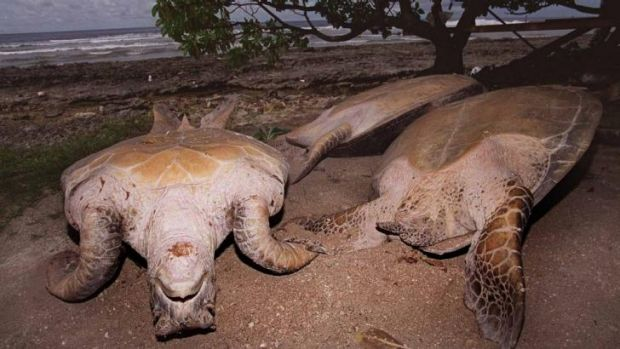 Survivor: The man found on the Marshall Islands said he ate turtles he caught barehanded.