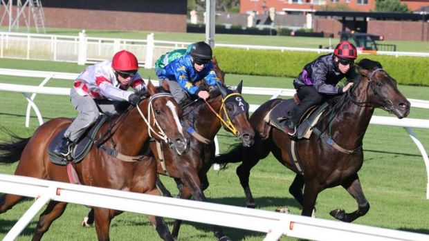Easy time: Fiorente, right, works home nicely for second behind Glencadam Gold, left, in a trial at Randwick on Friday.