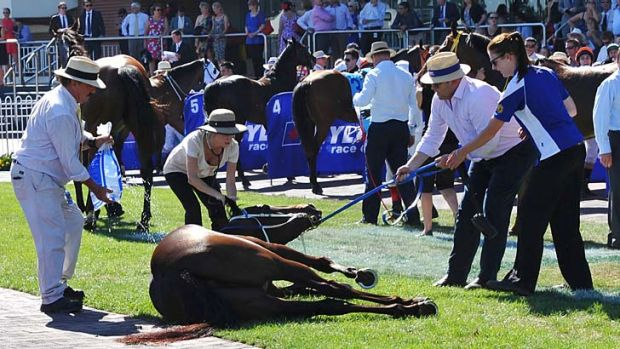 Trainer Peter Moody (right) and Melbourne Racing Club vets help Kiss A Rose after she collapsed in the mounting yard at ...