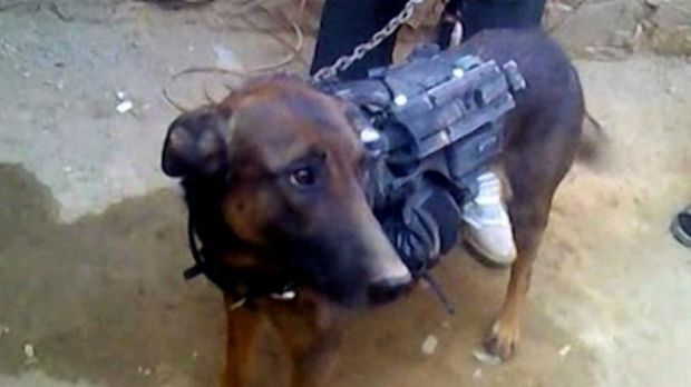 Held hostage: The dog's captors say they might be open to trading the animal.